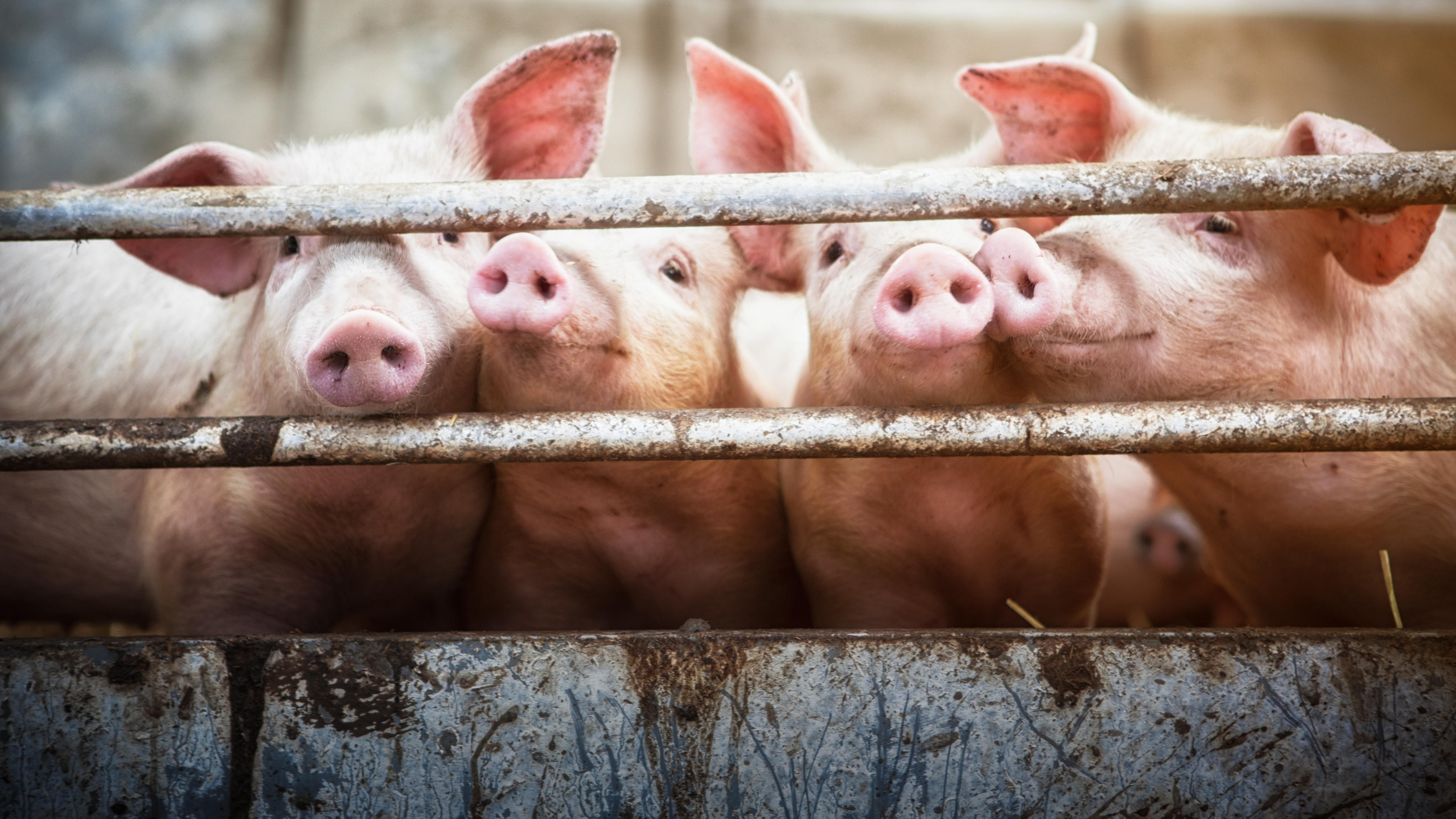 Warum ich kein Fleisch mehr esse – obwohl ich dachte, dass Vegetarier unrecht haben